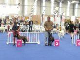 Championnats de France de Conformité au standard à Nantes