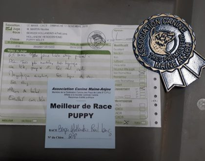 Exposition canine Nationale Spéciale Berger Hollandais - LE MANS